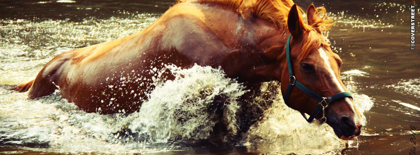Horse In Water  Facebook cover