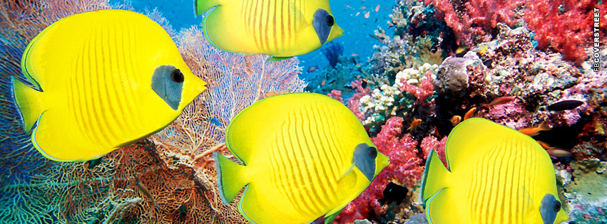 Fish Yellow Butterfly Fish  Facebook cover