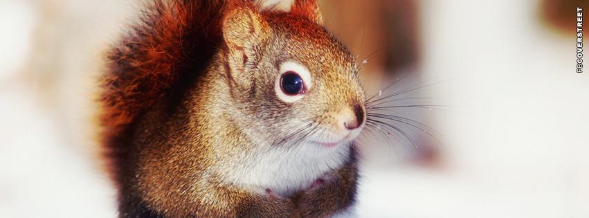 Winter Squirrel Facebook cover
