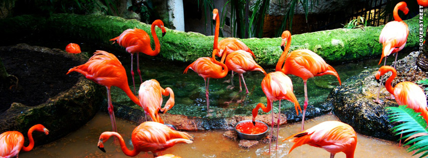 Flamingo Birds Facebook cover