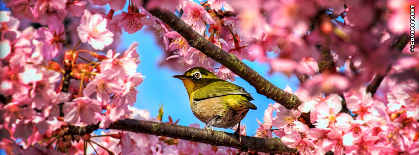 Japanese White Eye Bird  Facebook Cover