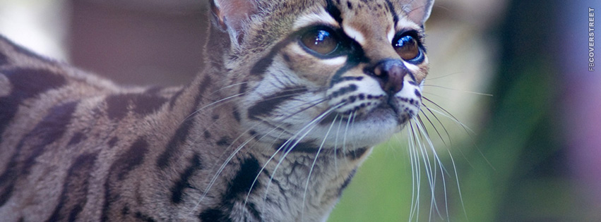 Pantanal Cat  Facebook cover