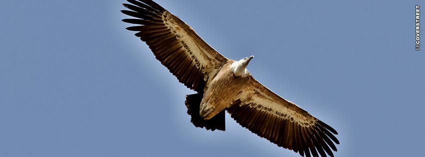 Vulture Soaring  Facebook cover