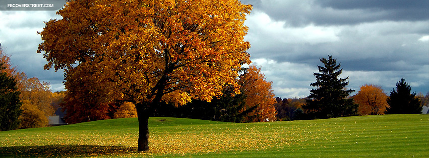Autumn Tree Facebook Cover