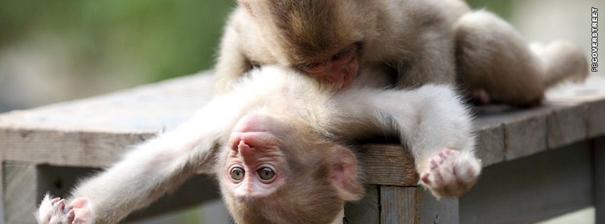 Monkey Playing Facebook cover