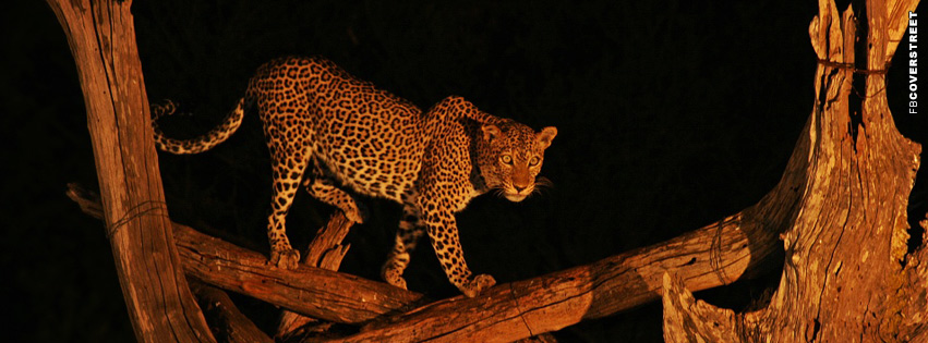 Tree Leopard Facebook Cover