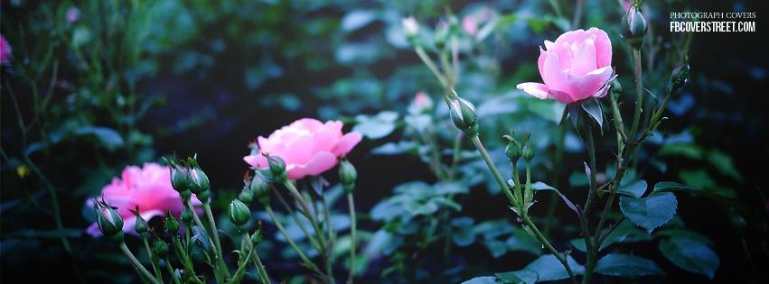 Pink Rose Garden Facebook Cover