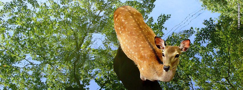 Deer In a Pond  Facebook cover