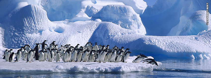 Penguins Diving  Facebook cover