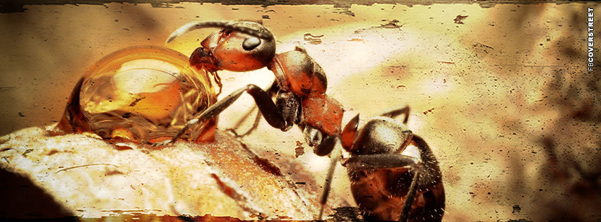 Ant Macro Grunge  Facebook Cover