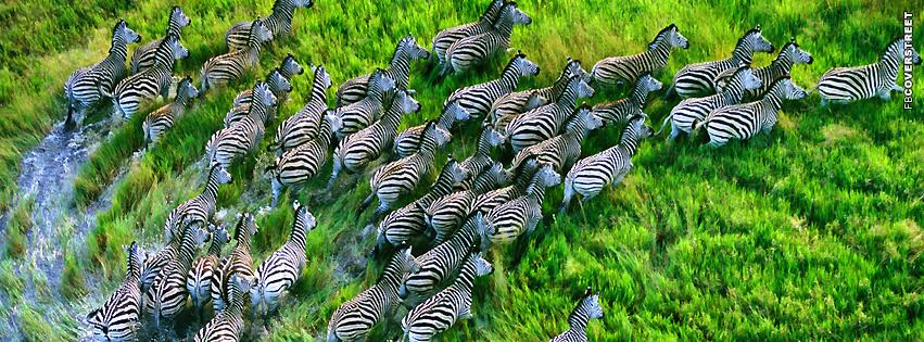 Zebra Herd Running  Facebook cover