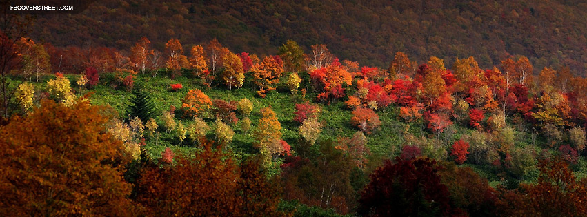 Autumn Trees Facebook Cover