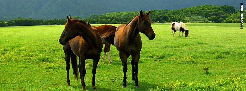 Horses on Land  Facebook cover